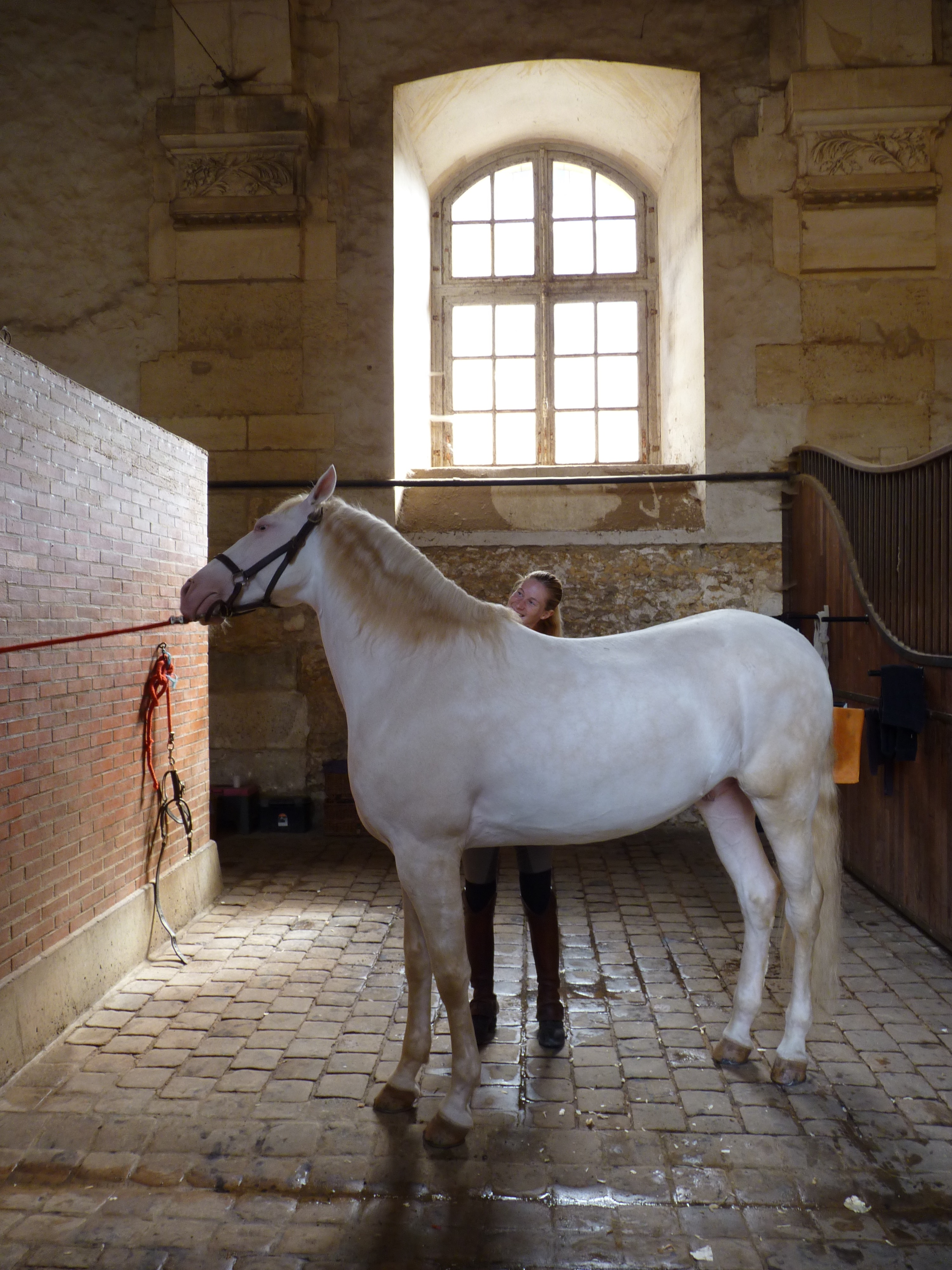 rencontre equestre