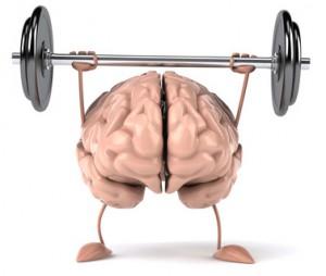 Cerveau muscu VdeV