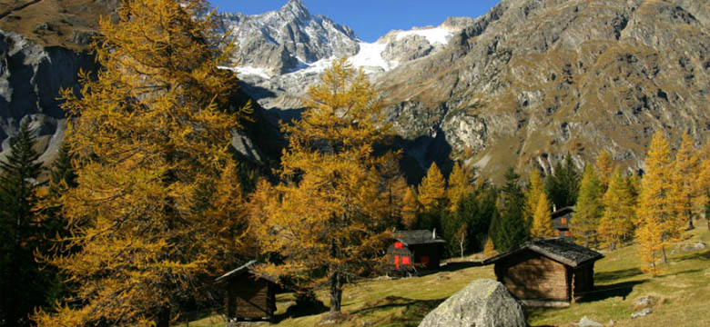 val-ferret-autumn