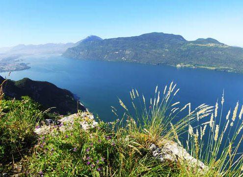 Lac du Bourget alaune
